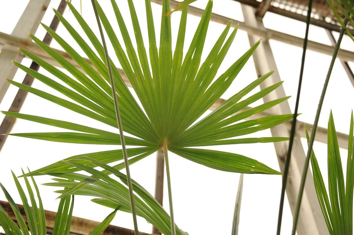 Ботанический сад СПбГУ приглашает на субботник