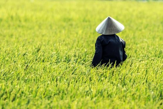 Доцент Екатерина Кнорозова расскажет о духовной культуре Вьетнама